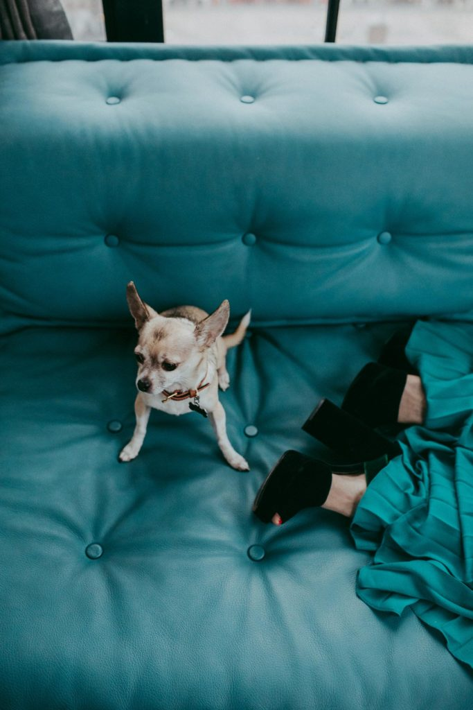 Chihuahua dog next to black high heels and a teal skirt on a couch in the Ludlow Hotel in NYC