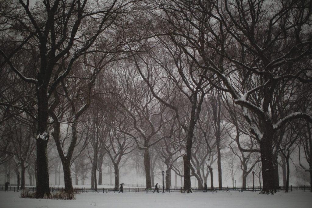 The trees of Poets Walk in Central Park NYC in the snow