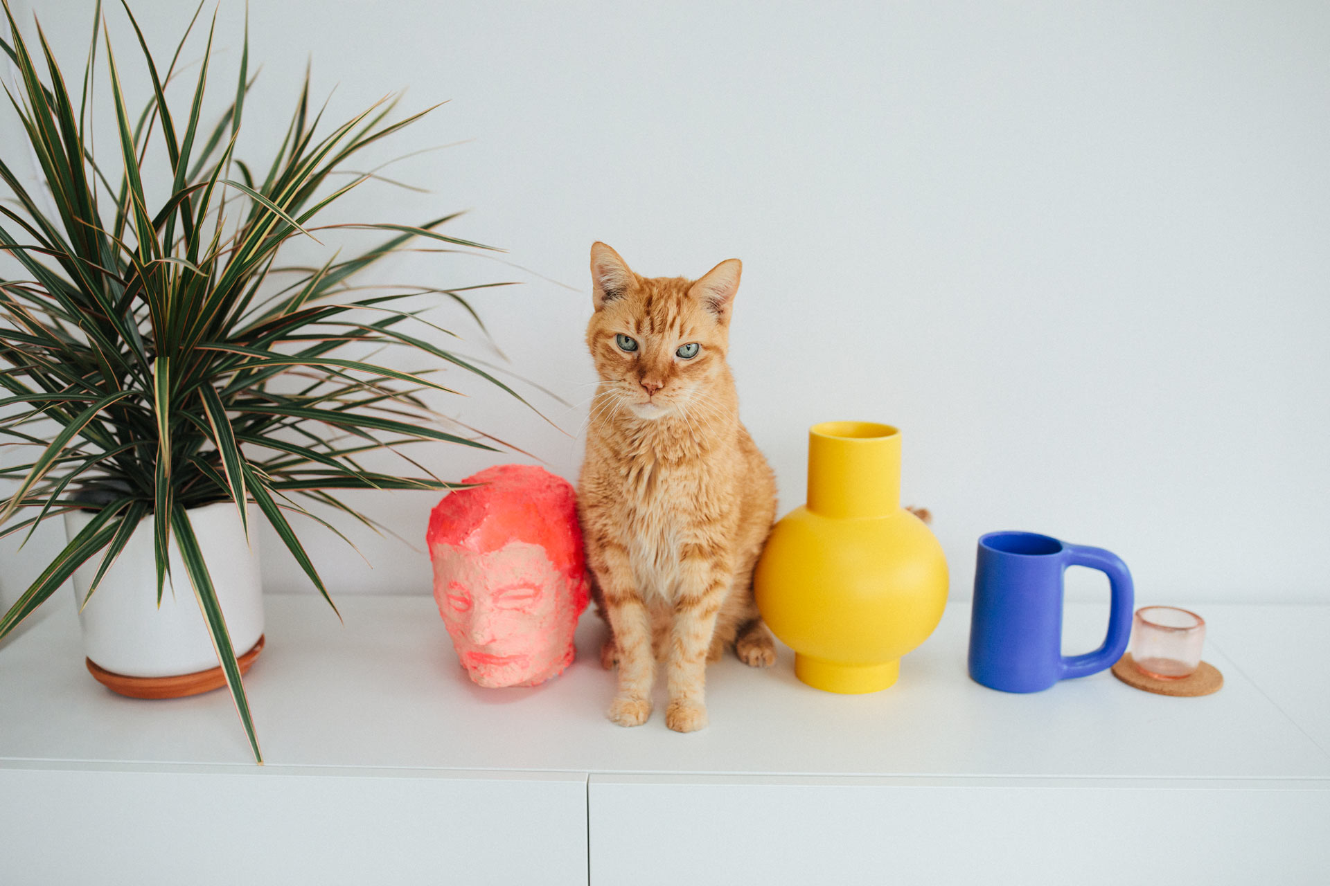 Portrait of Leo the orange cat sitting with a plant and ceramic vases and mugs in Brooklyn, NY